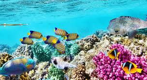 The Wonders of The Great Barrier Reef